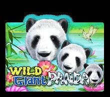 ทดลองเล่น Wild Giant Panda